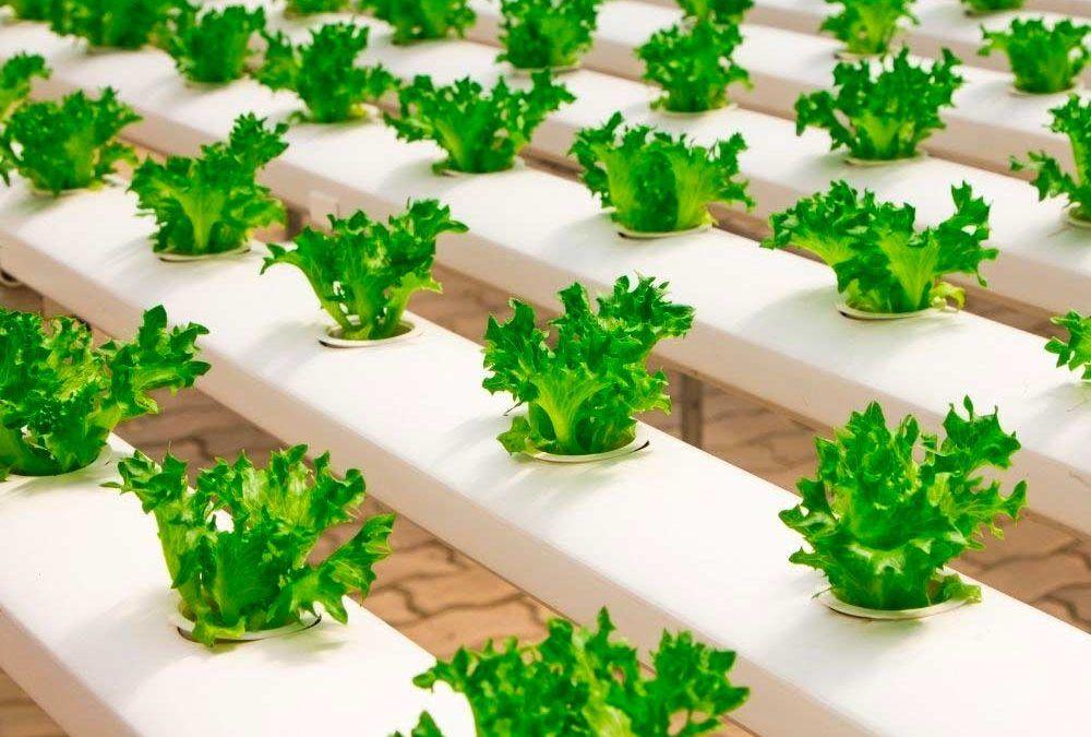 Segundo encuentro digital con profesionales agroalimentarios