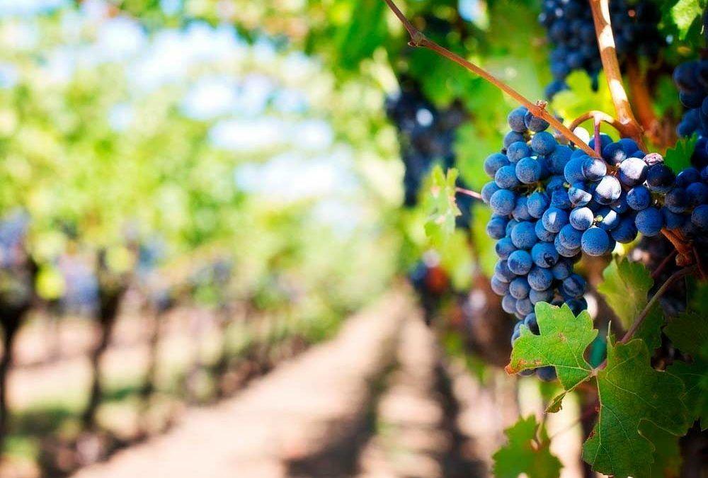 Encuentro digital con profesionales del sector vitivinícola